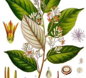 Featured Essential Oil: Benzoin